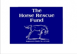 Companion-ponies-and-horses-urgently-require-permanent-loan-homes